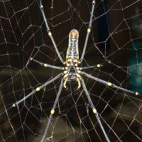 spider... not until man :: Олег Ионичев