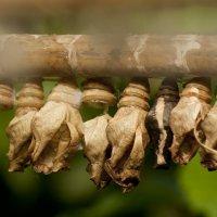 Коконы :: Lama Haag