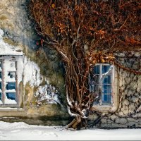Стена старого дома :: Надежда Кондратьева