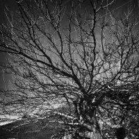 Дерево в скале :: Андрей Ленев