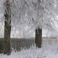Зимнее утро :: Павел Данилевский