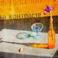 На контрасте. :: Юлия Холодкова