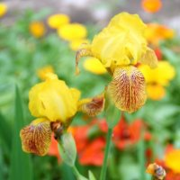 летние цветы :: Ekaterina Bogomolova