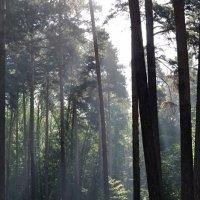 Утро в лесу :: Денис Нечаев