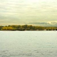 река Обь :: Ольга Хабарова
