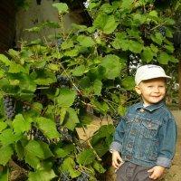 """""""Лиса"""" .. и виноград..)) :: Александр Герасенков"""
