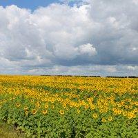 """Ах,облака...(или - """"желто-зеленое настроение..""""). :: Александр Герасенков"""