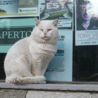 Итальянский котяра :: Alexander Zzz...