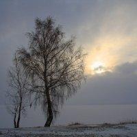 ... :: Ирина Кононова