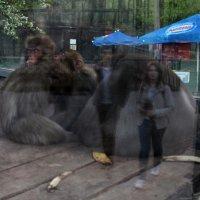Ночь музеев в зоопарке :: Анастасия Андреева
