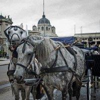 Viena :: You La-la