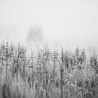 туман.утро :: Ярослав Макеев