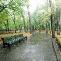 Городской парк :: Владимир Новиков
