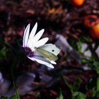 цветок и бабочка :: vitali bezushka