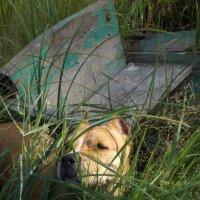 Моя собака :: Елена Соколова