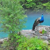 На Голубом озере. Абхазия. :: Владимир Зыбин