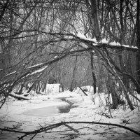 Зима на юге :: Alex In