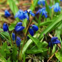 весной на даче :: татьяна вашурина