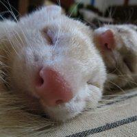 Спят уставшие хоречки :: Камилла Галиева
