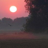 И вместе с солнцем просыпаясь... :: Юрий Морозов