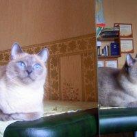 Котик :: Люба Гительман