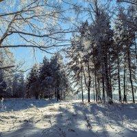 зимний лес :: Илья Макаров
