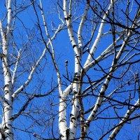 Последняя весна :: Ирина Сивовол