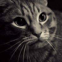 Маленький тигр :: Queen Molko