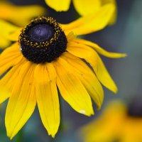 Цветы :: Борис Устюжанин