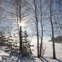 Морозное утро :: Анатолий Фролов