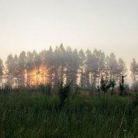 Рассвет в лесу :: Александр Карпенко