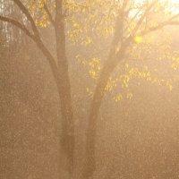 Дождь :: Денис Матвеев