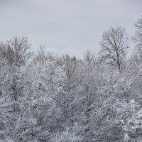 Зимний лес :: Анатолий Фролов