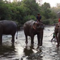 Слоновья маршрутка. :: Stas Ra