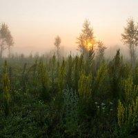 Летнее утро :: Александр Карпенко