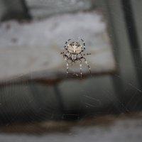 паук :: Владислав Боярышкин