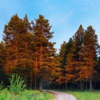 Закатные краски :: Владимир Зайцев