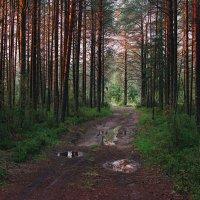 Закатные краски в лесу :: Владимир Зайцев