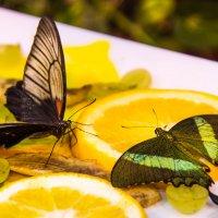 Завтрак для бабочек))) :: Мария Какоткина