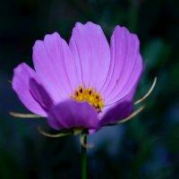 цветок в темноте :: Анжеліка Гончаренко