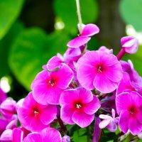 цветочек :: Анжеліка Гончаренко