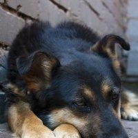 собака :: юрий мотырев