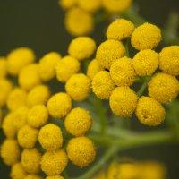 цветы :: юрий мотырев