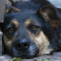 моя собака :: юрий мотырев