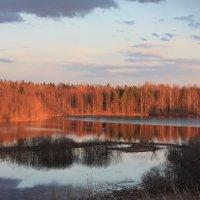 дикая природа :: Катюшка Lashkova