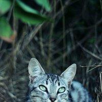 Кошки тоже мечтают:) :: Natasha Voronina