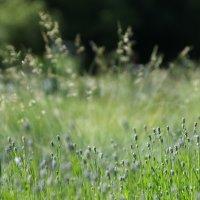 травы :: Елена M