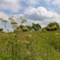 июльские травы :: Лана Lana