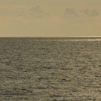 Золотое море. :: Светлана Винокурова