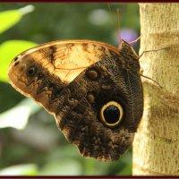 Бабочка :: Яков Геллер